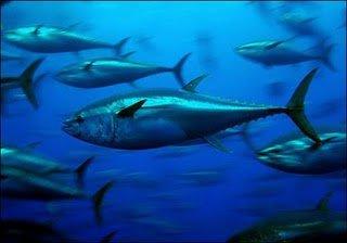 lihat ikan ikan melimpah ruah di sini, di negara ini